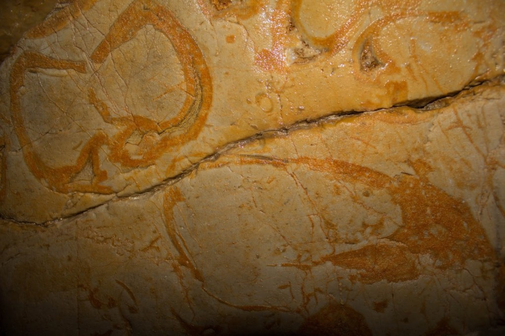 shell fossils in srnica cave slovenia
