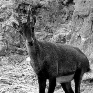 gams-triglavski-narodni-park