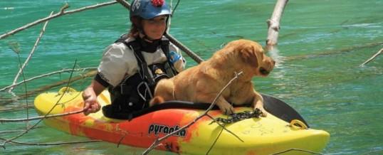 Ali lahko na rafting vzamem psa?